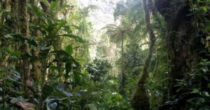 Panama Reforestation Project - Carbon Offsetting